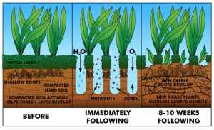 Core Aeration of your lawn blaine mn